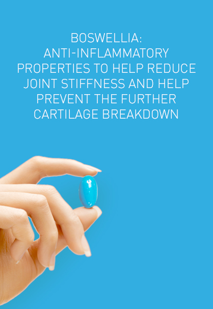 BOSWELLIA: ANTI-INFLAMMATORY PROPERTIES TO HELP REDUCE JOINT STIFFNESS AND HELP PREVENT THE FURTHER CARTILAGE BREAKDOWN