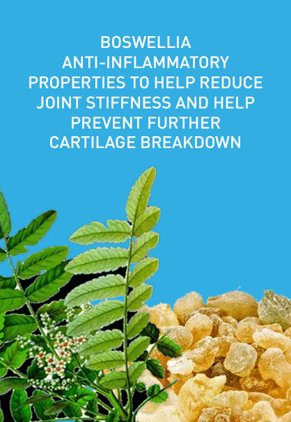 BOSWELLIA ANTI-INFLAMMATORY PROPERTIES TO HELP REDUCE JOINT STIFFNESS AND HELP PREVENT FURTHER CARTILAGE BREAKDOWN