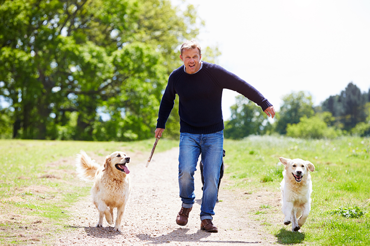 guy playing with dogs
