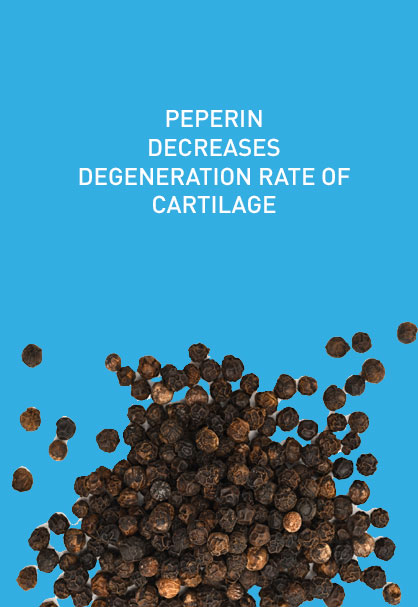 PEPERIN DECREASES DEGENERATION RATE OF CARTILAGE